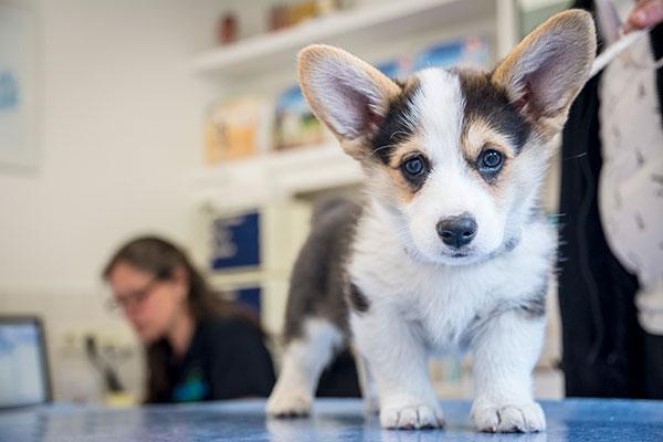 gezelschapsdieren-hond-3