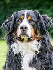 gezelschapsdieren-hond