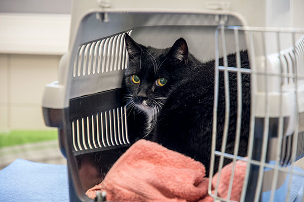 gezelschapsdieren-kat-3