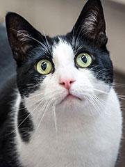 gezelschapsdieren-kat