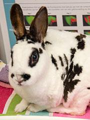 gezelschapsdieren-konijn-4
